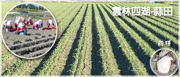 台灣農作物系列